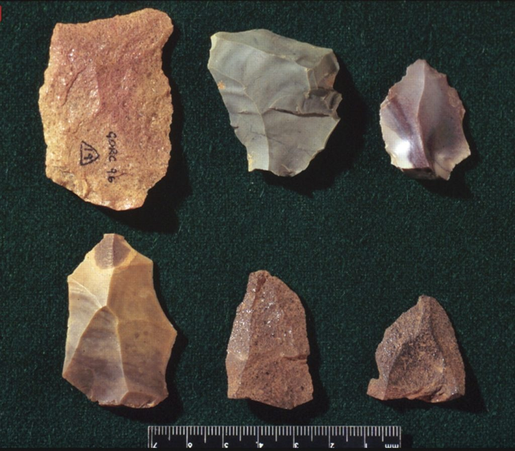 Image of stone homeowner tools used by Homo Habilis