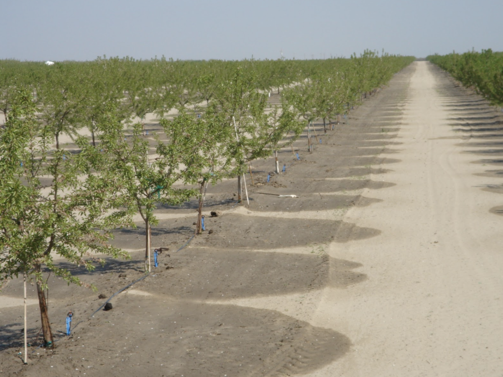 Garden Image showing almond orchard sprinklers in operation