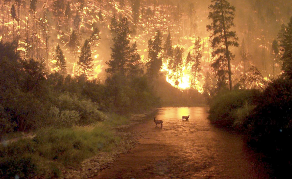 Image of wild fire at night along a river with deer in the river.