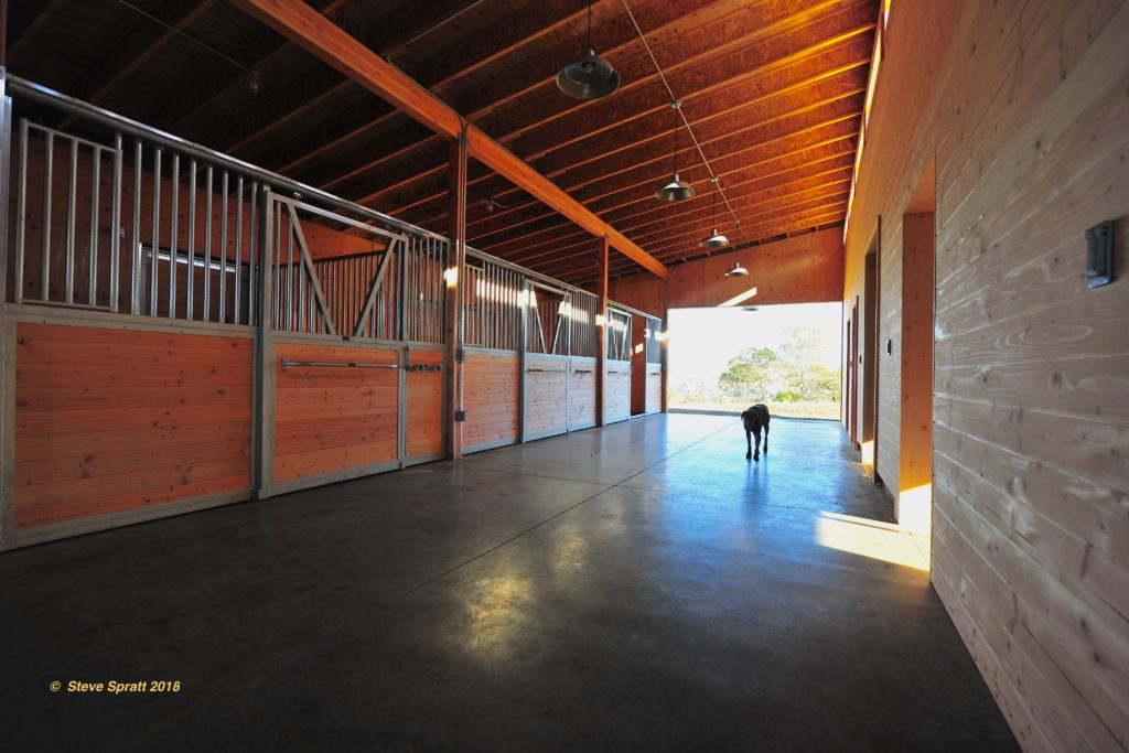Image of barn breezeway including three stall fronts and dog