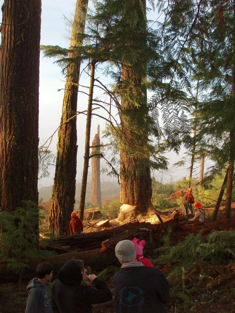 Protecting big timbers and beams